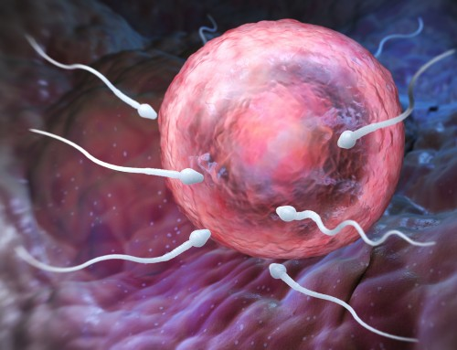 The Great Sperm Race Part three – The Fallopian Tube